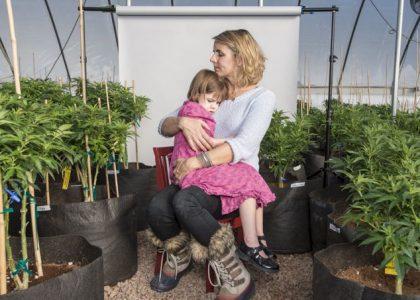 Cannabis et épilepsie, l'espoir à petit pas